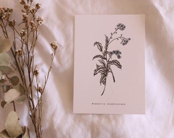 Forget-me-not postcards | Single Card | A6 | Blank Cards | Prints | Small | Botanical | Colour print | Wall art | Stationery