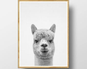 Alpaca Print, Nursery Animal Print, Nursery Animals, Nursery Art Print, Alpaca, Nursery Animal Art, Nursery Animal Decor, Alpaca Wall Art
