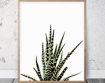 Cactus Wall Art Print, Succulent Print, Desert Wall Decor, Succulent Wall Art, Botanical Print, Succulent Wall Print, Cacti Prints Green Art