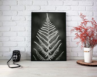 Poster print fern photography