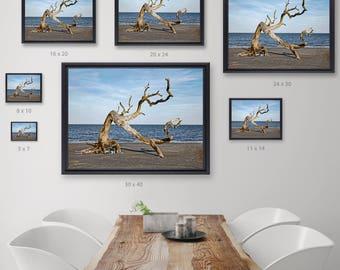 Driftwood Beach photography, Jeckyll Island Beach Photography, Wanderlust Beach Photograph, Fine Art Print, Fine Art Photography