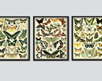 Butterfly Print - Butterflies Set of 3 - Butterfly Wall Art - Insect Decor - Science Illustration - Entomology