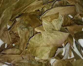 Jamaican Soursop leaves (Organic) 100