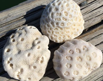 Fossil Coral Rock, Surf Tumbled, Coral Fossil, Small Old Fossil, Destination Wedding, Coastal Decor, White Coral Fossil, Fish Tank Decor
