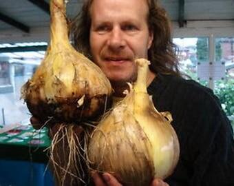 Giant Onion - Globo (80 SEEDS)