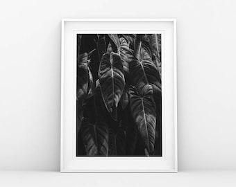 Banana Leaf Print - Black White - Botanical Art Print - Plant Wall Art - Leaf Art Print - Scandinavian Poster - Danish Nordic Printable Art