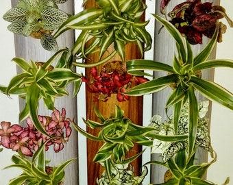 Totem plant. Deco. Wedding decoration. Set of three columns. Flower pot