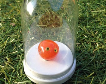 15%Off Code-EOFYSALE15-Pet Rock-tumbled carnelian stone 1.5cm long in a 6cm dome-great for children's rock collection-cheap to feed!