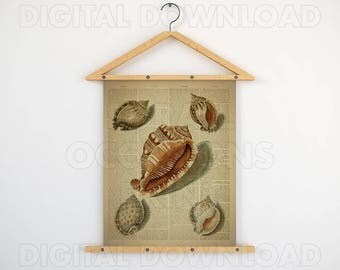 Shell printable, Dictionary, Digital download, Antique nautical, 16x20 large poster, Nautical, Shell art prints, Vintage picture, Wall art