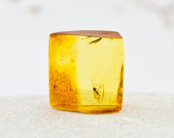 Genuine Baltic Amber Specimen with Fossil Insect In3-060218