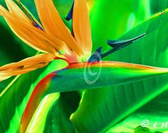 Bird of Paradise tropical art print