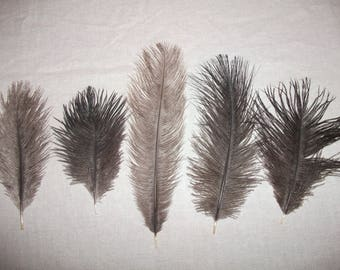 Lot 10 10 to 20 cm set 1 ostrich feathers