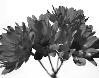 Black & White Flower Series 3 - Aluminum Print