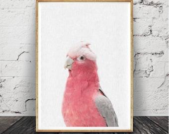 Impression de Cacatoès rosalbin, cacatoès Rose Art mural, les filles , chambre de bébé, photographie d'oiseaux australiens