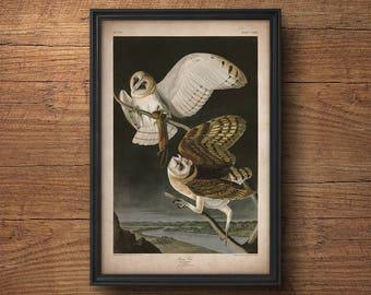 Audubon bird print, Owl print, Antique bird print, Audubon poster, Birds of America, Large wall art, Nursery art, Wall decor, Large art