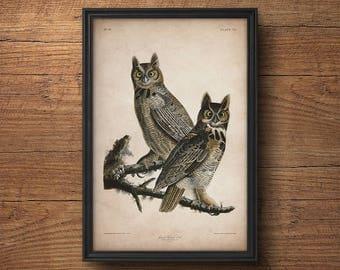 Audubon bird print, Owl print, Antique bird print, Audubon poster, Birds of America,  Large wall art, Nursery art, Wall decor, Large print