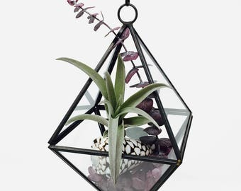 Just A Dream Geometric Air Plant Terrarium Kit - Gift Boxed