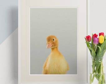 Duckling Print, Peekaboo Animal Print, Baby Animal Prints, Duckling Nursery Decor, Lion Wall Art Print, Kids Room Decor, Children's Decor