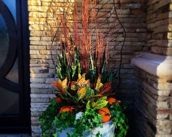 Fall pumpkins! This sample container is representative of an infinite combination of plants that can be combined for a beautiful display.