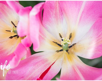 "Metal Print - ""Pretty in Pink"", Multiple Sizes Available, Ready to Hang"