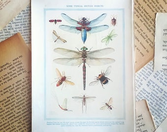 vintage insects book page ephemera