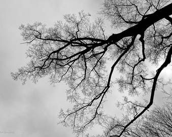 Digital Download Photography - Winter Landscape (Series 1)