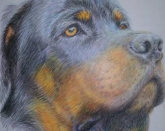 Coloured Pencil Sketch Print by Sue Rathbone-Britch