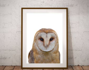 Owl Wall Art-Owl Poster-Owl Nursery Print-Digital Download-Printable Woodlands-Barn Own Print-Snowy Owl Print-Owl Photo-Cute Owl Print