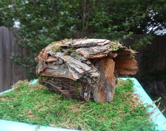 Fairy bark log house