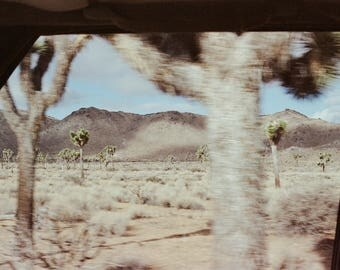 joshua tree by hilary kathleen unsigned