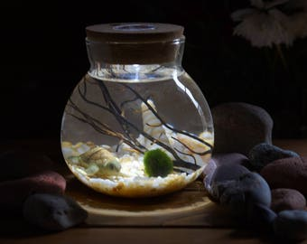 Miniature Marimo Moss Ball Orb Enclosure Ecosystems Terrariums Aquarium