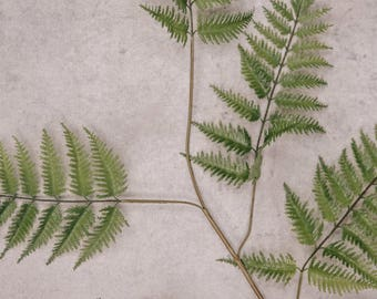 Faux Fern Light Green