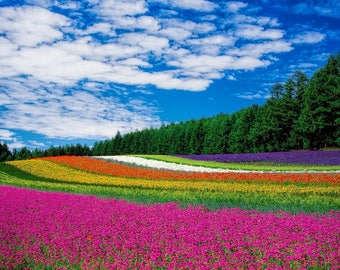 Great decorative field of flowers.