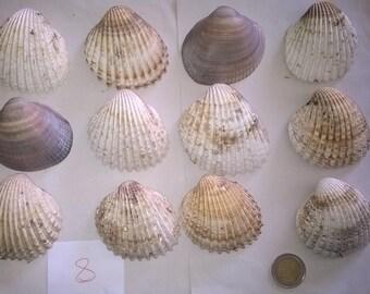 8 c) ocean shells, grass, clam shell