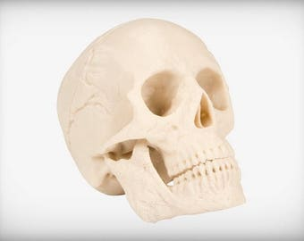 Fractals, Foramina and More:  We Have a 3D Replica Authentic Skull with Your Name On It