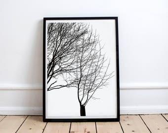 Affiche Arbre Feuilles Affiche Nature Poster Photo Branches Tronc Hiver Poésie Affiche Zen Affiche Forêt Affiche Déco Intérieur Cadre Hygge