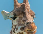 Giraffe Blank Greetings C...