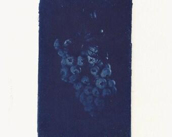 Maine Blueberries II Cyanotype Print (Prussian Blue)