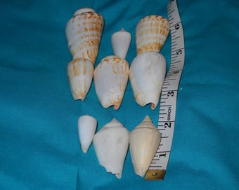 lot of 9 assorted cone shells for crafts
