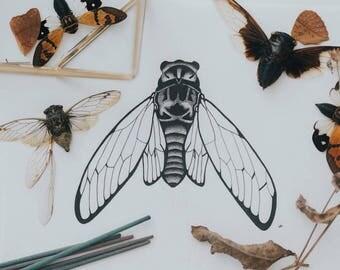 Missouri Cicada
