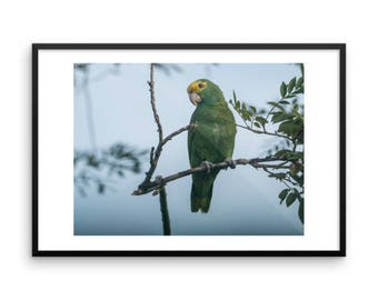 Wild Yellow-Headed Parrot Framed print