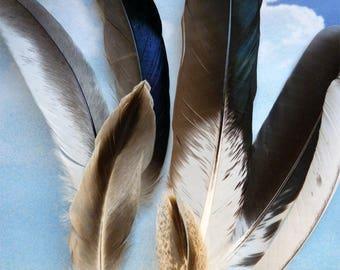 Set of mallard duck feathers