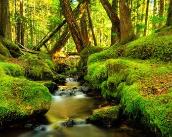 Pacific northwest mossy creek panoramic photography, Tree photography, Forest print, Instant download, Printable art, Wall art, Fine art