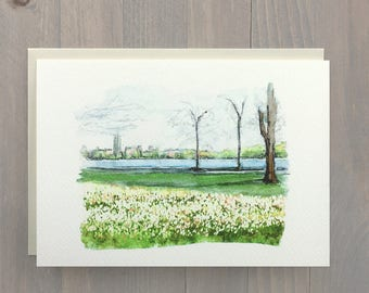 Festival Tulips, Ottawa, Canadian Greeting Card, Watercolor Painting, Artist Card, Blank Card