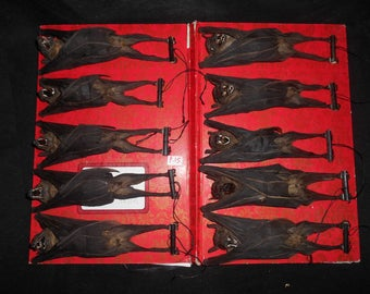 Taxidermy Fruit Bat Large Mummiefied 10 Pcs