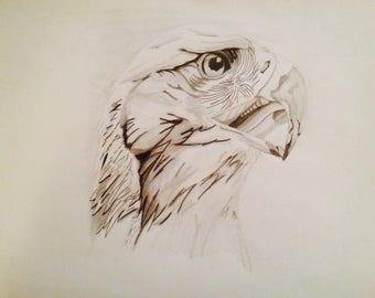 Bald Eagle drawing