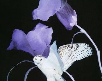 Owl in purple