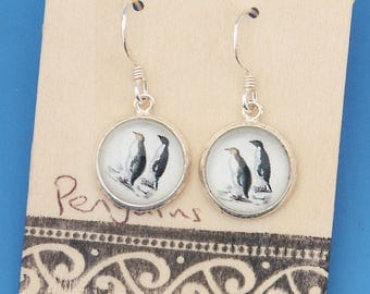 New Zealand Penguins, bird, vintage art print, Earrings, glass dome art, sterling silver earring wires