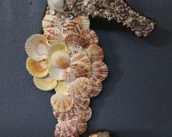 Sea Shell Sea Horse