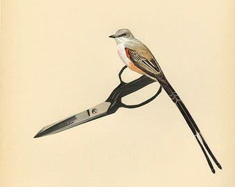 Scissor tail. Collage print by Vivienne Strauss.